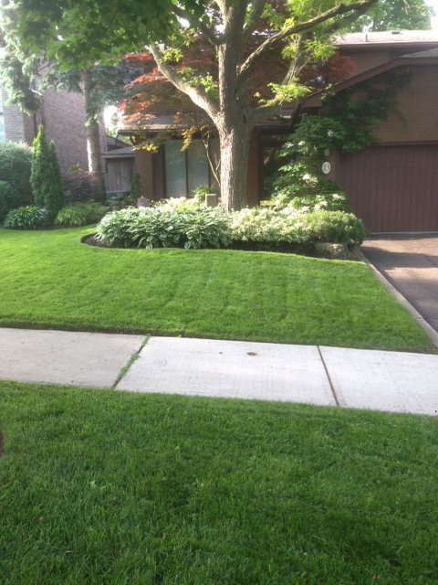 Gallery Image 11 - Lawn Cut on Both Sides of the Sidewalk